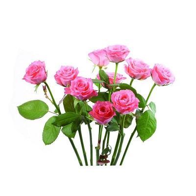Extrait de fleur de rose - Partie utilisée: Fleur  Apparence: brun rouge poudre