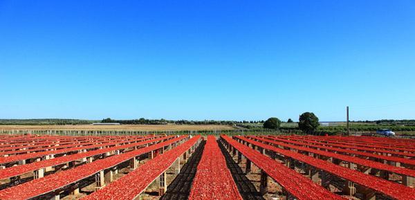 pomodori seccato