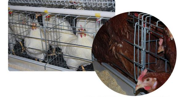 Layer chicken cage - Animal Cages