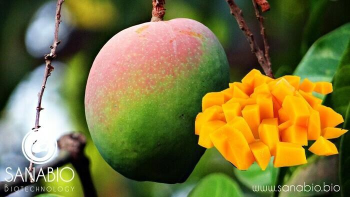 Mangobutter, BIO FOOD - null