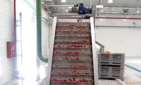 Trasportatori - Macchine per Ricezione, lavaggio e trasporto