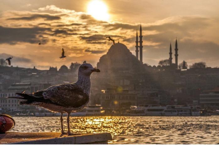 Услуги агента в Турции - Предлагаем поиск, покупку, доставку товаров из Турции