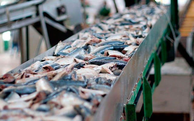 """Линия для производства рыбных консервов """"под ключ"""" -"""