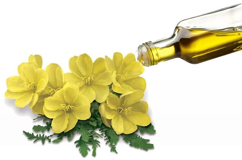 Organic Evening Primrose Oil - cold pressed, virgin - OENOTHERA BIENNIS SEED OIL