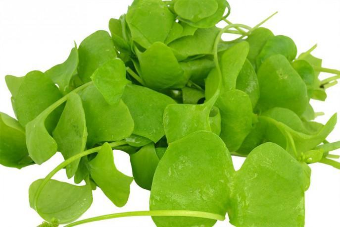 Pourpier - Légumes - jeunes pousses