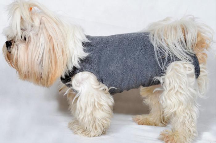 Roupa pós cirúrgica Unissex para cães - exclusiva para cães