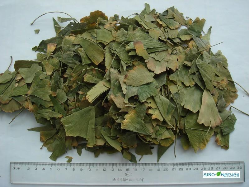 Ginkgo leaves - null