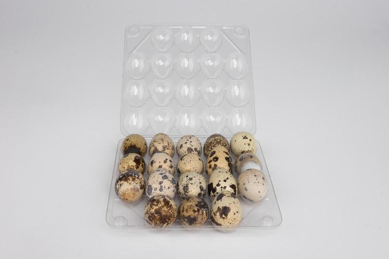 Food package - Egg box for 18 quail eggs