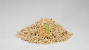 Protein pea concentrate Protelon