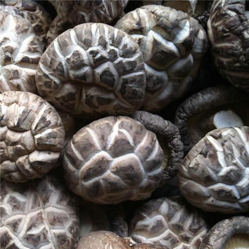 tea flower shiitake mushroom