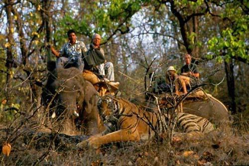 4N 5D Jaipur, Ranthambore (Tigers), Agra (Taj Mahal) Tour - 1N Jaipur-2N Ranthambhore-1N Agra (By Car)