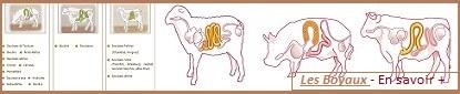 Boyaux naturels - Mouton / Porc / Boeuf