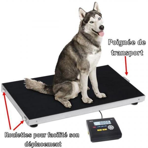 Balance large plate-forme - Balances à animaux