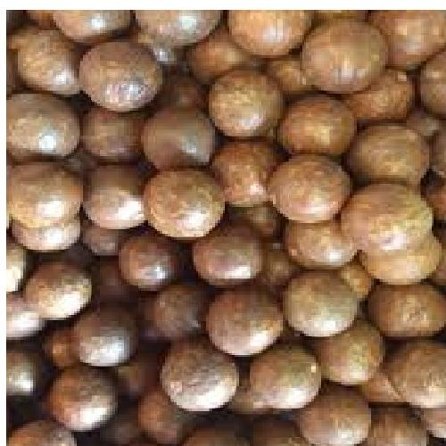 In Shell Macadamia Nuts - Australian Grown In Shell Macadamia Nuts for Export