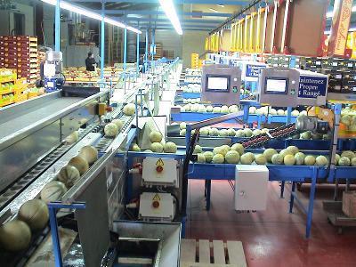 Calibreuses pour melons - De 12 t / heure à   20 tonnes / heure