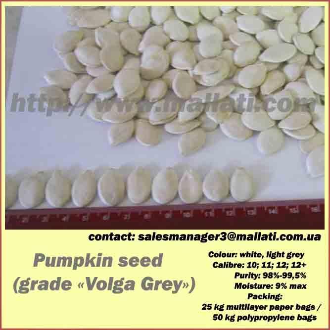 Pumpkin seed   (grade «Volga Grey») - Pumpkin seed   (grade «Volga Grey»)