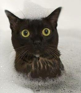 спрей , шампунь, крем - спрей , шампунь, крем для котов и собак