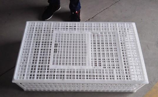 960×560×270mm white chicken/duck/poutry transport cage  - Poultry plastic chicken/duck/dove/pigeon transport cage /crate/case/box