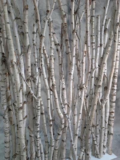 Paravent troncs de bouleaux troncs de bouleaux deco for Bois flotte beziers