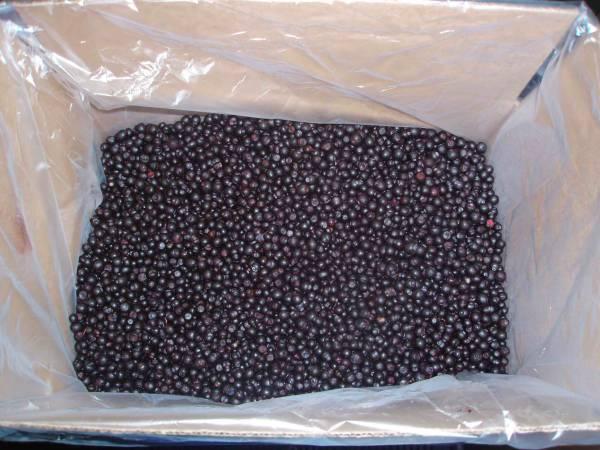 черника - черника замороженная, ягода,