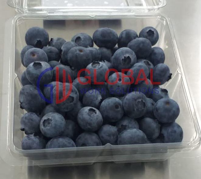 Arándanos - Blueberries - Arándanos Biloxi Blueberries