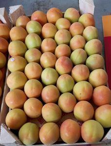 apricot - fresh apricot