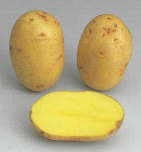 Potatoes - Yellow skin - VICTORIA