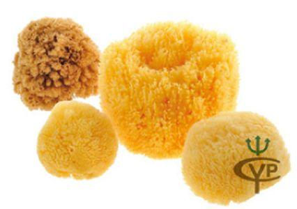 Natural sea sponge - Origin : caribbean - grass