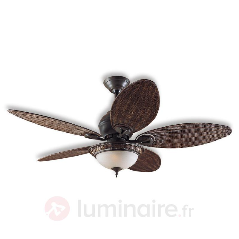Ventilateur de plafond Caribbean Breeze - Ventilateurs de plafond lumineux