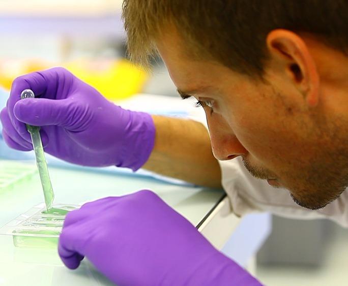 Recherches autour de la réparation tissulaire -