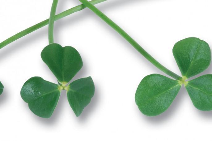 Citra Leaves - Micro végétaux