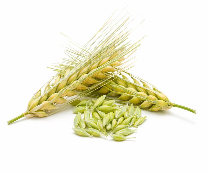 Barley organic -