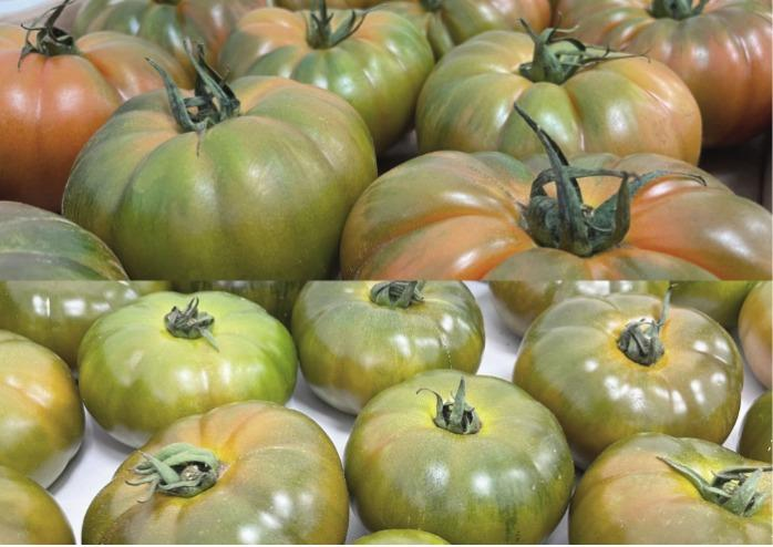 Tomate by Ecoinver -