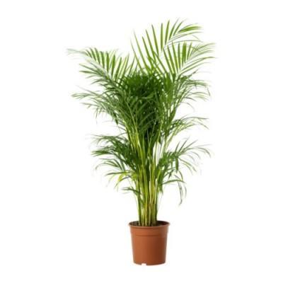 Plante verte naturelle