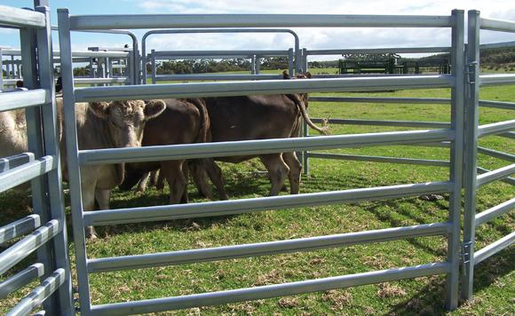 Cattle/horse/sheep panels-6 or 5 rails  - Horse Fence, cattle fence panel, sheep fencing