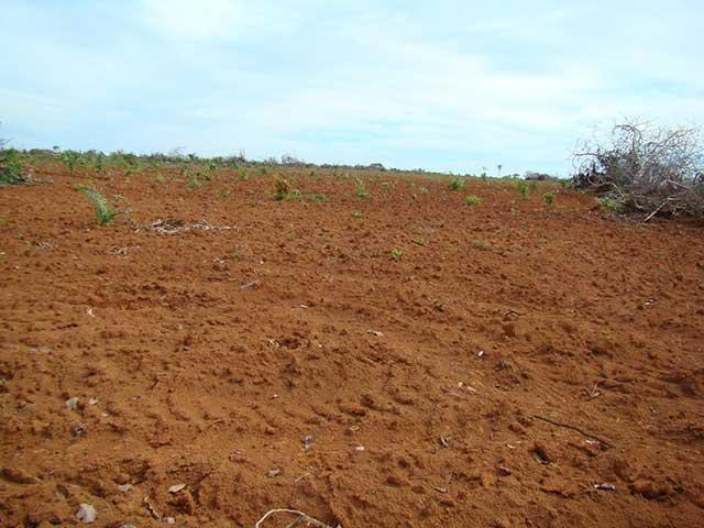 Farmland for sale in Tocantins Brasil - Reference: FARM TO-003