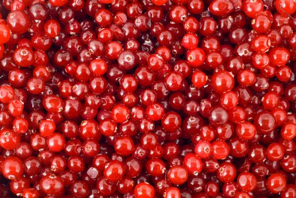 Cranberry - fruits de Cranberries