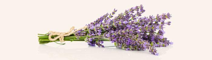 Les Parfums de Provence - Re PP30 - Parfums de Provence