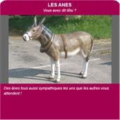 Animaux en résine - äne en résine : âne en résine taille réelle