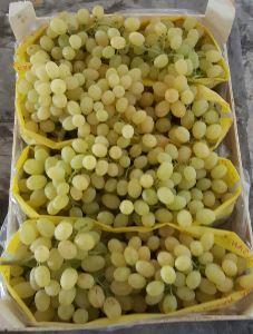 seedles grapes