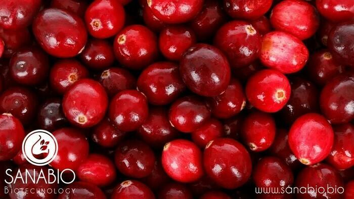 Cranberrypeeling, BIO KOSMETIK - null