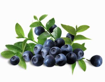 Замороженная ягода - замороженная черника в упаковке гофров-мешок по 25 кг