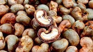Cashew nuts -