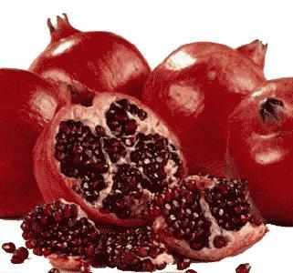 pomegranate -  Egyptian Native / Wonderful