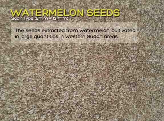 WATERMELON SEEDS - Popular snack, very rich in protein and omega-6 fatty acids.