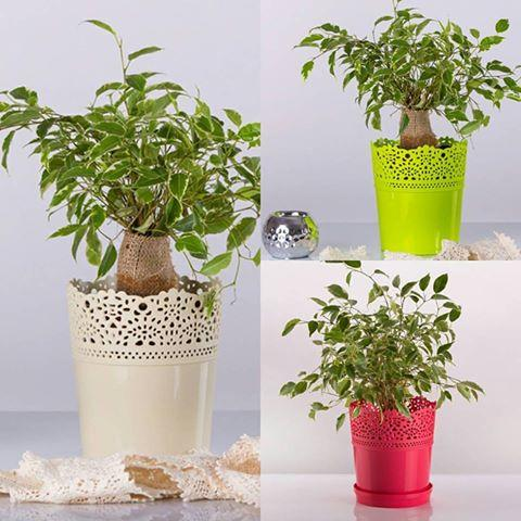 Dentelle flower pot -  diam 16  10 colors