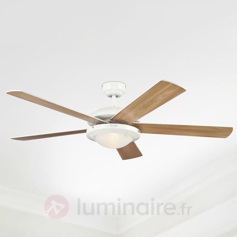 Ventilateur plafond Comet 2 utilisable tte l'année - Ventilateurs de plafond modernes