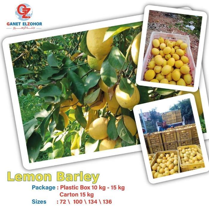 citron - Adalia