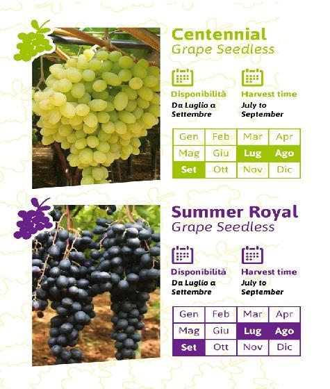 CENTENNIAL & SUMMER ROYAL -