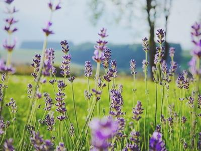 LES ARÔMES ALIMENTAIRES - Notes de fleurs et de plantes